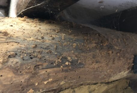 Damage to timber work caused by wood-boring beetles